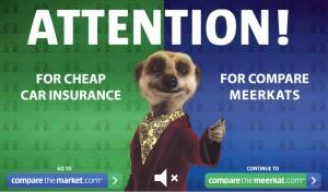 meerkat-com21